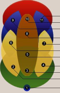 Die Positionen im Dragballteam