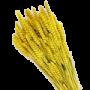 dragosien:material:getreide.png